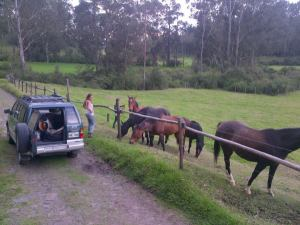 Visiting horses in Pintag