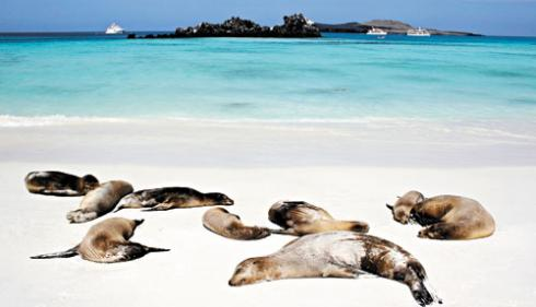 Galapagos-Islands-Seals