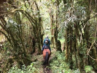 Colombia horseback riding los llanos coffee region