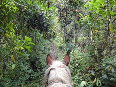 horse pululahua